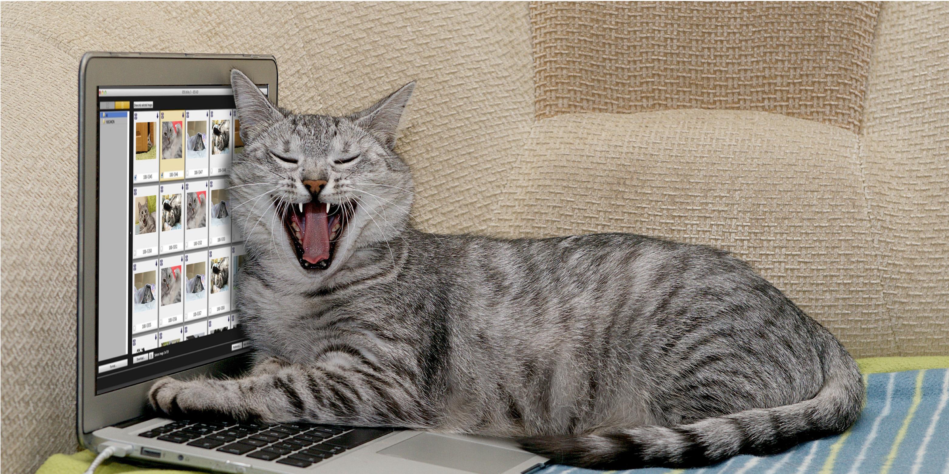 Si Mi gato usó EOS Utility... ¿Porqué tú no?