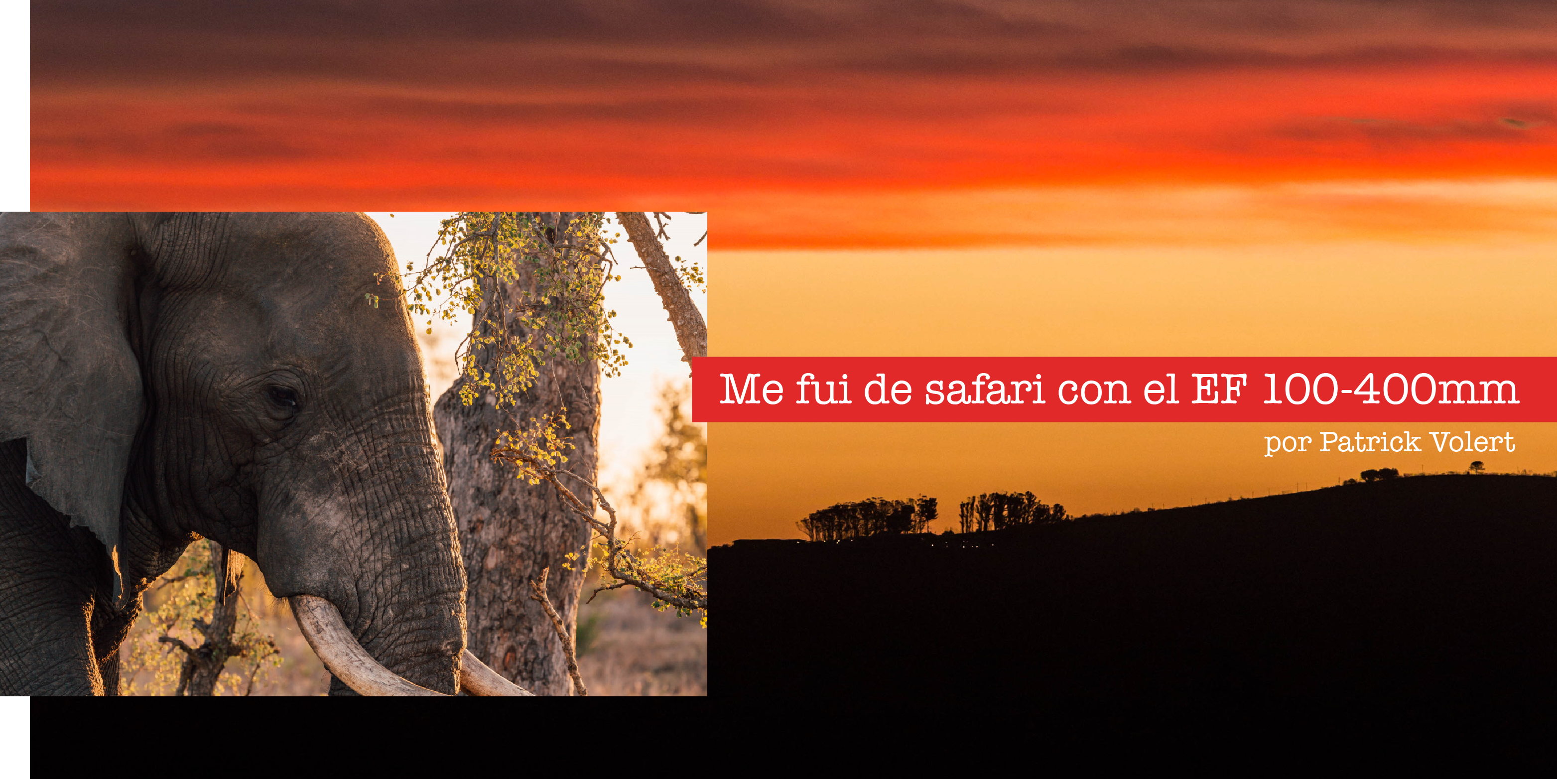 """""""Me fui de Safari con el EF 100-400mm"""" -Patrick Vollert"""