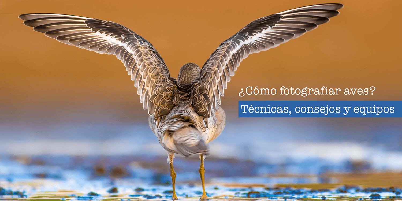 ¿Cómo fotografiar aves? Tips para tener en cuenta